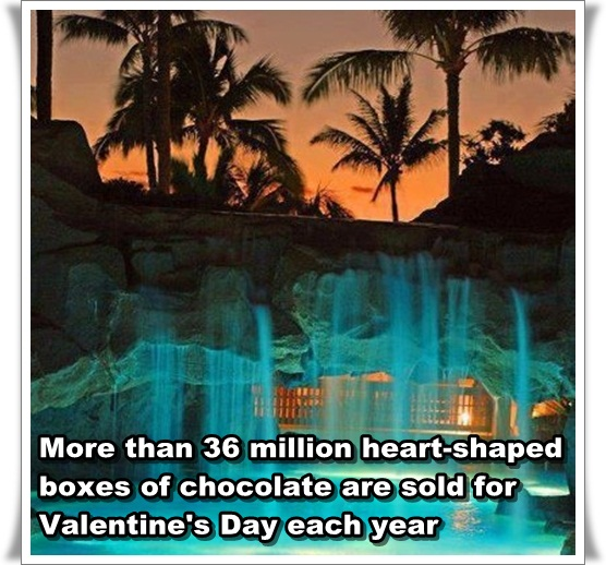 An Amazing Night at Maui Marriott Hawaii Resorts Amazing Love Day Facts