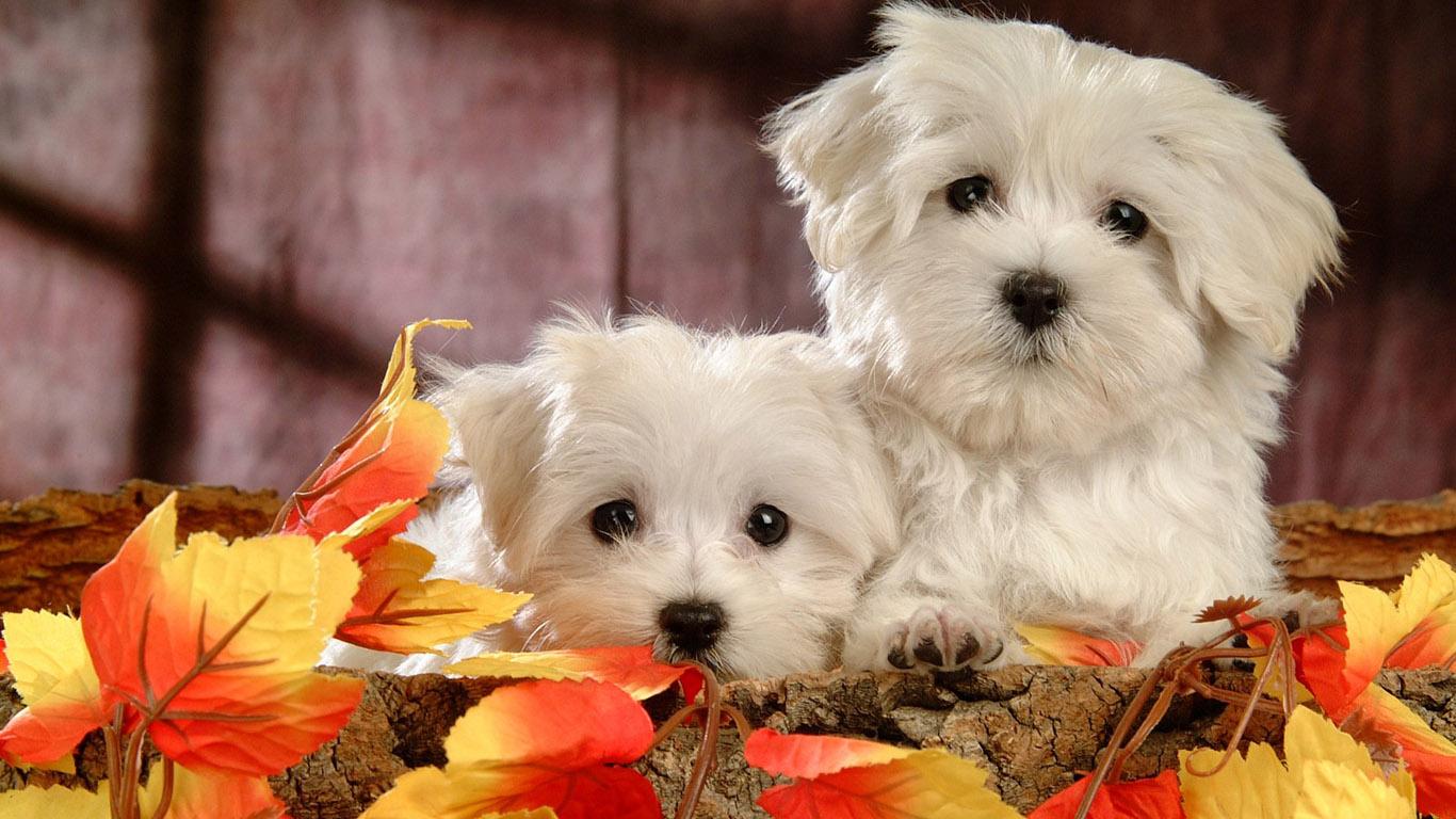 Beautiful Dogs Wallpaper 11 Cute Dogs