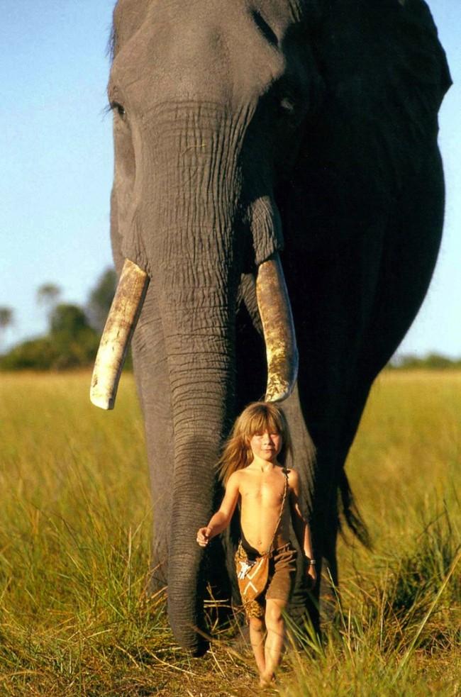 "������ �������� ""���� �����"" ������ Tippi-Degré-with-African-Wildlife-Animals7-650x983.jpg"