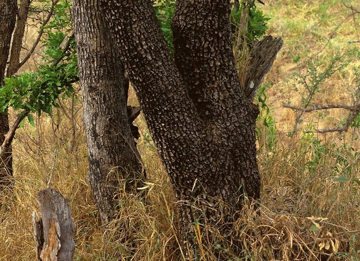 Can You Spot These Camouflaged Animals?