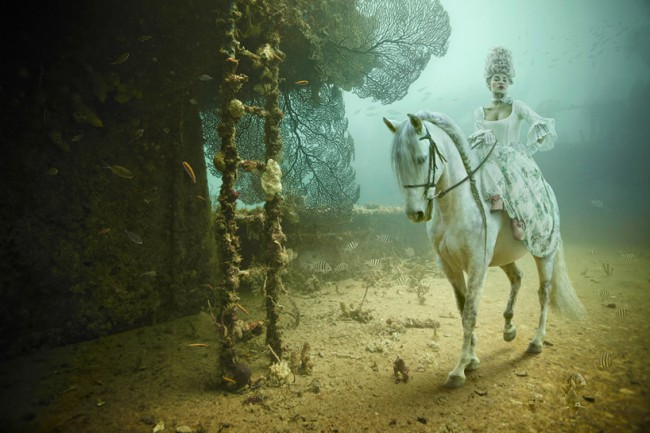franke 1 650x433 underwater photography by andreas franke