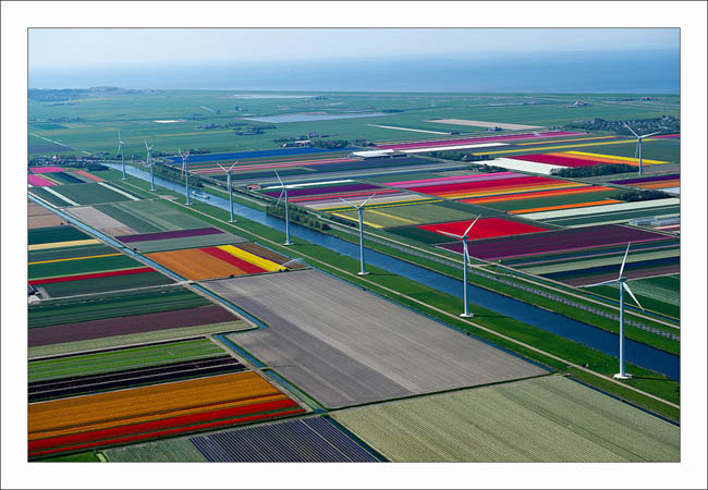Tulip Fields in the Netherlands 2 Some Awesome Shots Of Tulip Field Of Netherlands