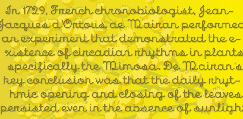mim03 Mimosa Font