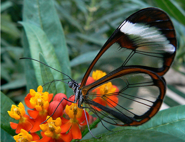 Butterfly Photography 15 Awe Inspiring Butterfly Photography