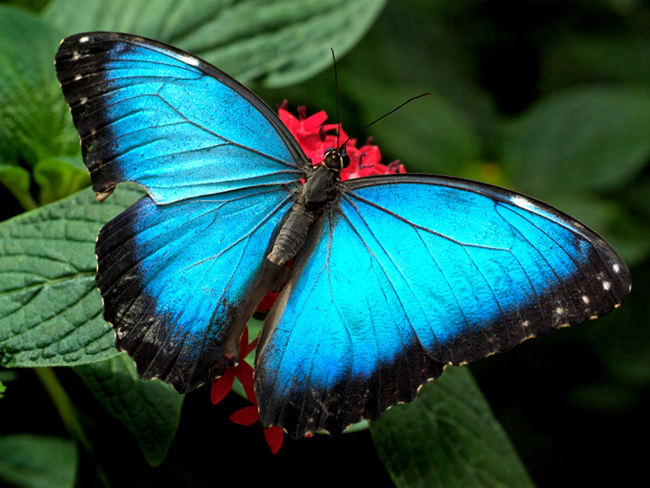 Butterfly Photography 2 Awe Inspiring Butterfly Photography