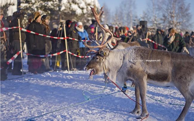 Jokkmokk 47 650x406 408th Jokkmokks Marknad Photography