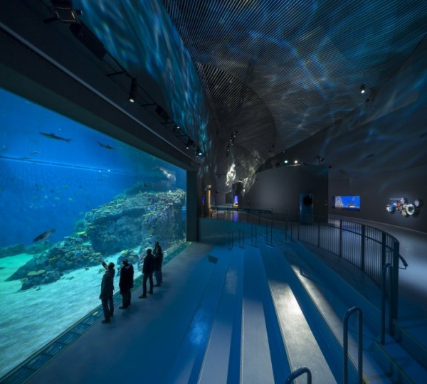 blueaquarium 3 600x540 Denmark Opens Largest Aquarium In Northern Europe