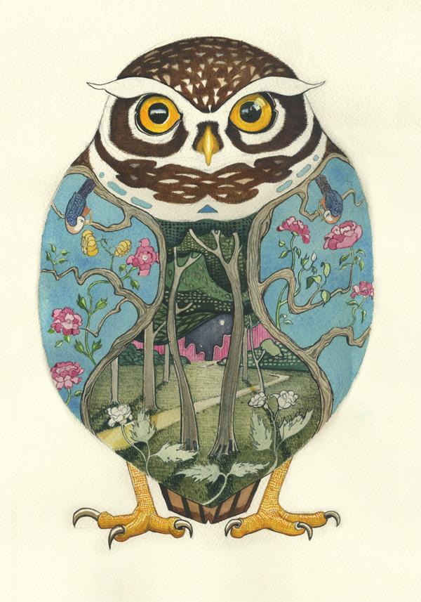 little owl Little Owl by Daniel Mackie