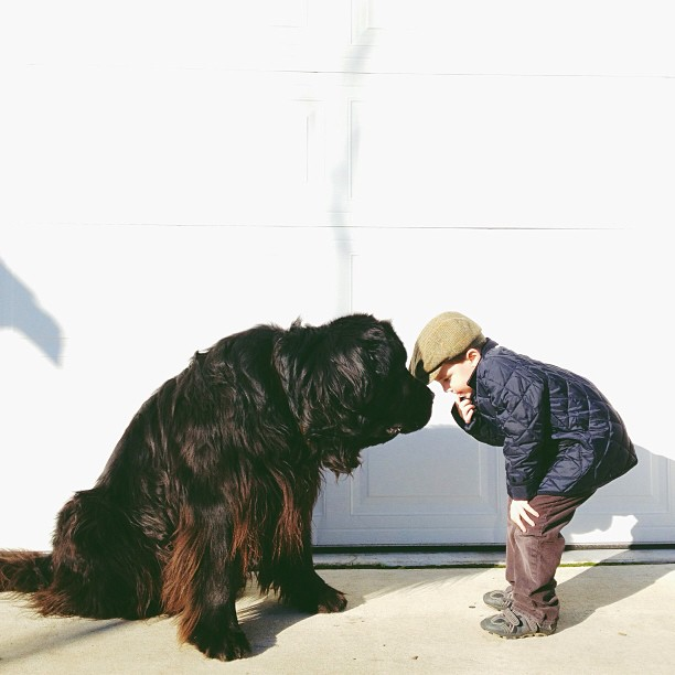 northwestmommy 00 Genuine Love Between a Little Boy and His Big Dog