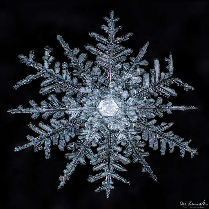 snowflake 10 Crystal Clear Snowflake Photos by Don Komarechka
