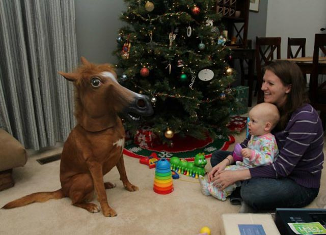 Christmas Pony 10 Awesomest Photos of Pets Wearing A Creepy Horse Mask