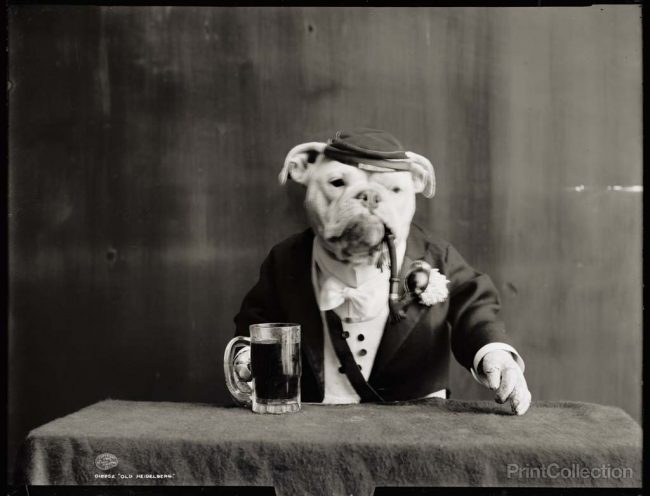 Dog with a pipe 1905 650x496 16 Retro Photos of Animals