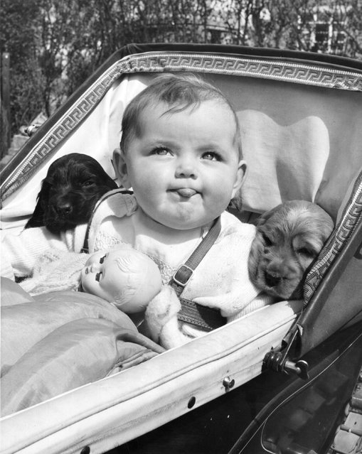Funny Vintage Photos of Dogs