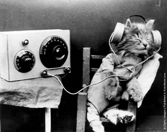 Interesting Vintage Photos of Cats