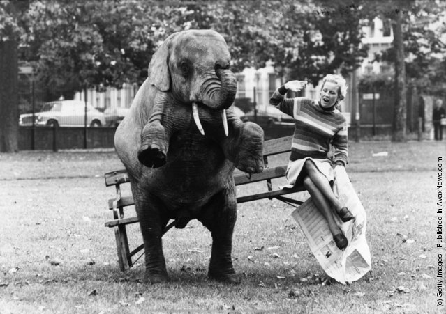 Old & Funny Photos of Elephants