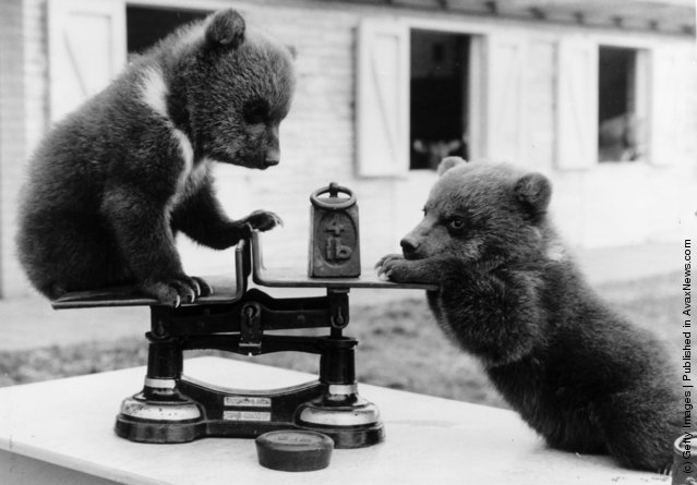 Vintage Photos of Cutie Baby Animals
