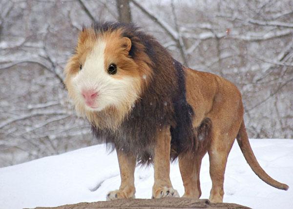 photoshopchimera 3 Bizarre and Hilarious Animal Mash Ups