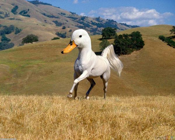 photoshopchimera 5 Bizarre and Hilarious Animal Mash Ups