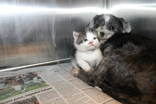 Rescued kitten Dog Rescues And Takes Care Of Trapped Kitten