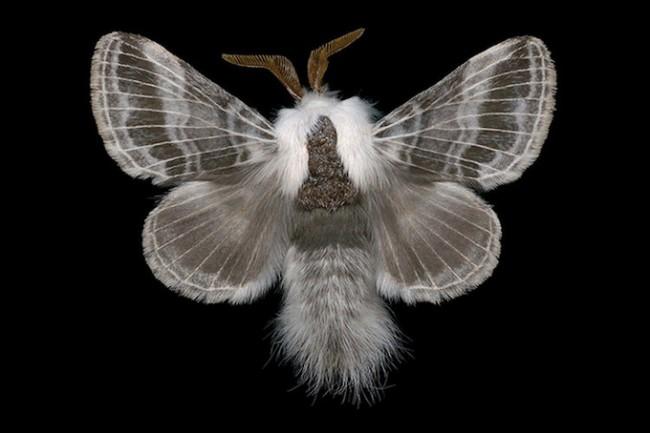 jimdesrivieresmothsatlarge 12 650x433 Jim des Riviéres' Moth collection