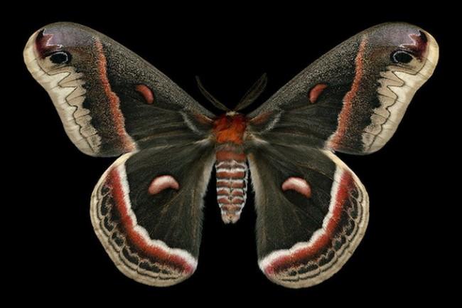 jimdesrivieresmothsatlarge 18 650x433 Jim des Riviéres' Moth collection