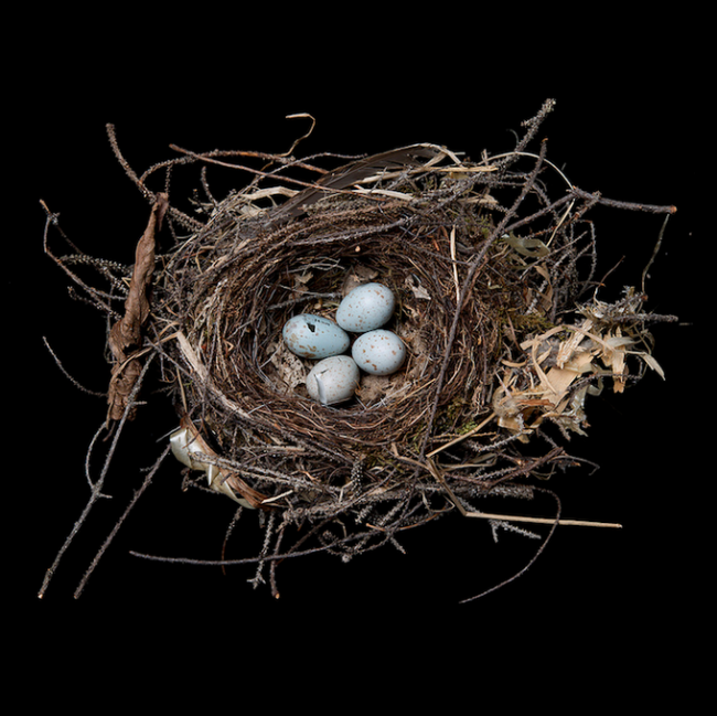 Sharon Beals 650x649 Bird Nest By Sharon Beals