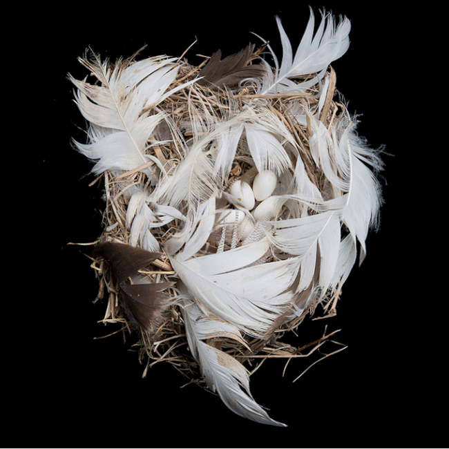 Sharon Beals3 650x650 Bird Nest By Sharon Beals