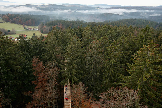 1100 The World´s Longest Tree Top Walk
