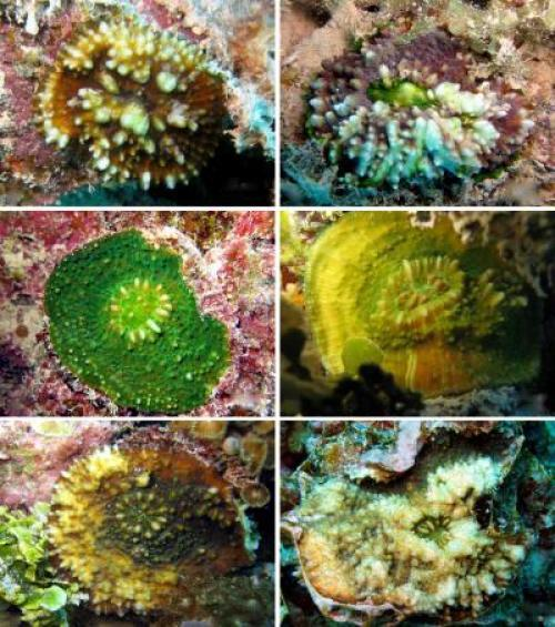 6110 New Coral Reef Species From The Gambier Islands