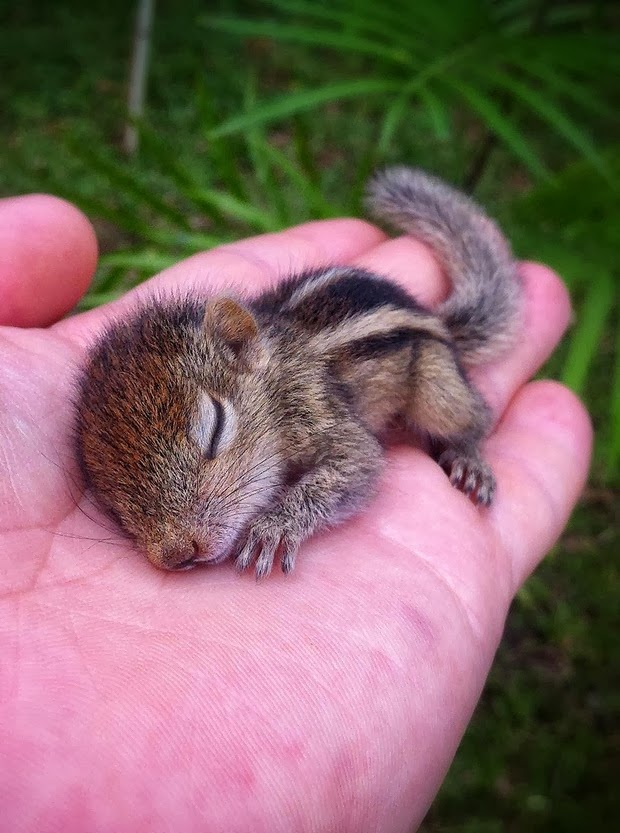Baby Palm Squirrel Rescued By Wildlife Filmmaker 7 Cute Baby Palm Squirrel Rescued By Filmmaker