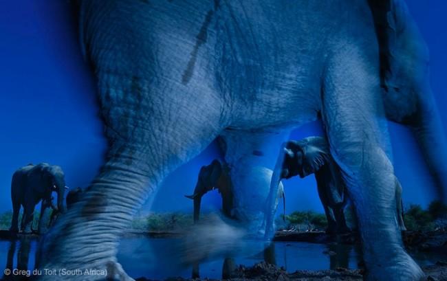 wildlife photographer 00 650x409 Winners of the Wildlife Photographer of the Year 2013