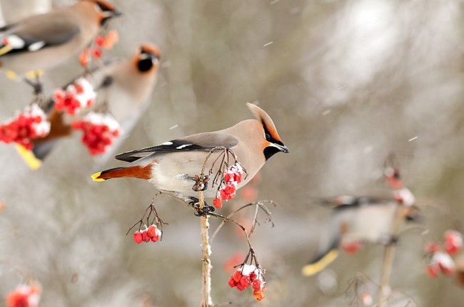 beautiful bird in snow 650x431 Amazing Photography Part 3