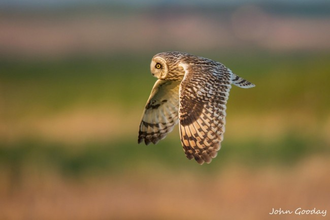 flying owl 650x433 Nature At It's Best Pictures Part 2