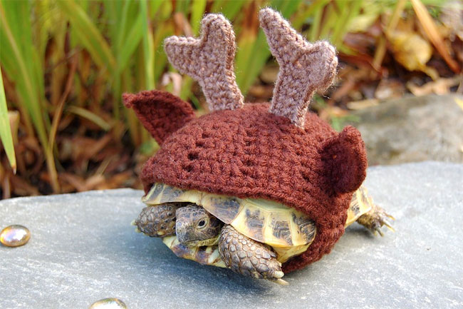 1276 Tortoise Art by Katie Bradley
