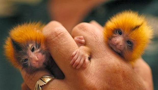 adorable baby animals Cute Photos of Tiny Animals on People's Fingers