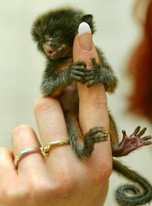 tinny animals on fingers 3 Cute Photos of Tiny Animals on People's Fingers