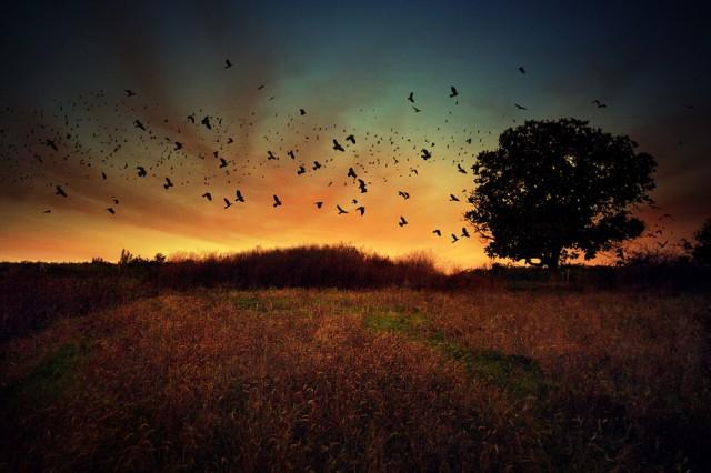 1336137169 16 640x426 Amazing Landscape photography by Alexandru Popovski