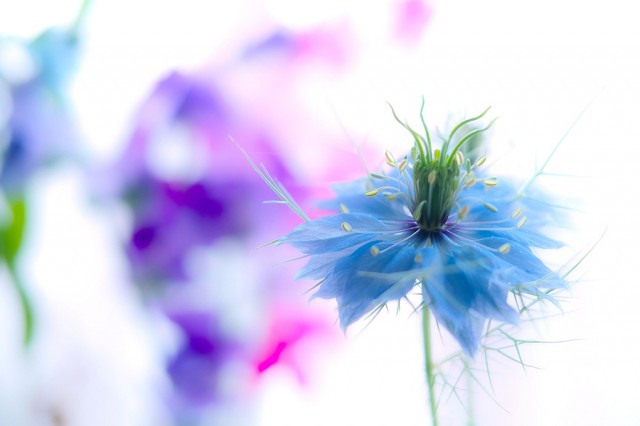 1353918961 16 640x426 Touching Flower Fragility in the Lafugue Logos Photography