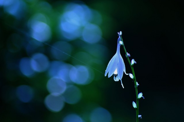 1353918980 27 640x425 Touching Flower Fragility in the Lafugue Logos Photography