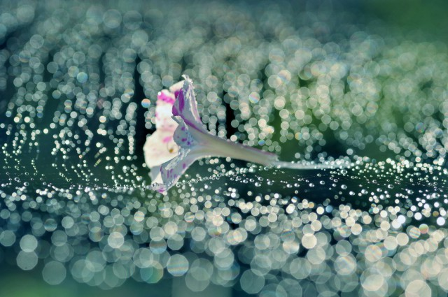 1353918991 8 640x425 Touching Flower Fragility in the Lafugue Logos Photography