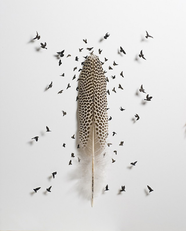 Feather Marvels by Chris Maynard