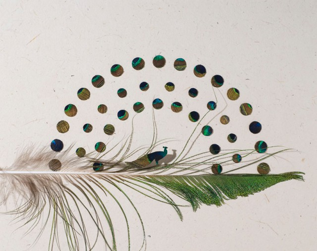 1354700746 3 640x508 Feather Marvels by Chris Maynard