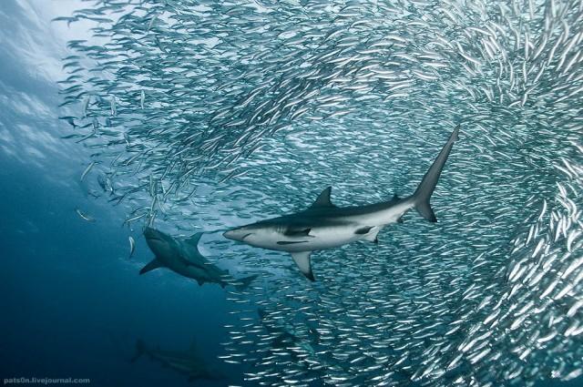 1355810431 3 640x425 Beautiful Underwater Photography by Alexander Safonov