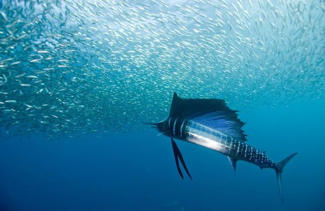 1355810473 1 640x415 Beautiful Underwater Photography by Alexander Safonov