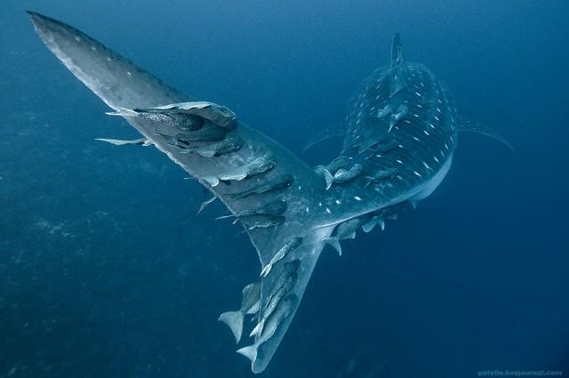 1355810493 6 640x425 Beautiful Underwater Photography by Alexander Safonov
