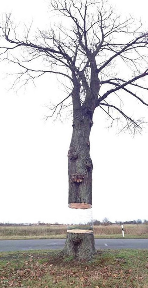 Illusion Painting On Tree By Daniel Siering and Mario Schuster 3 Illusion Painting On Tree By Daniel Siering and Mario Schuster