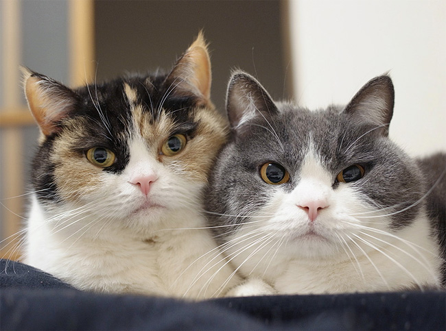 1105 Warning: Seeing These Adorable Cats Cuddling With Each Other Might Make You Say Awww Aloud