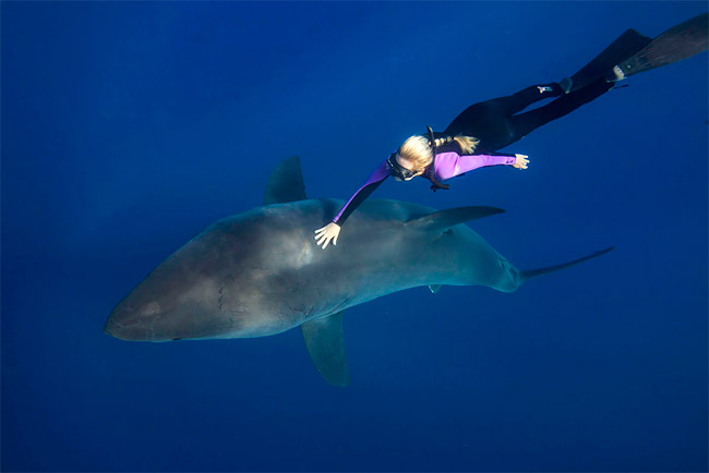 1266 Freediving with Great White Sharks