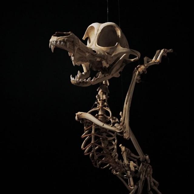 1368118977 3 640x640 Cartoon Skeletons by Hyungkoo Lee