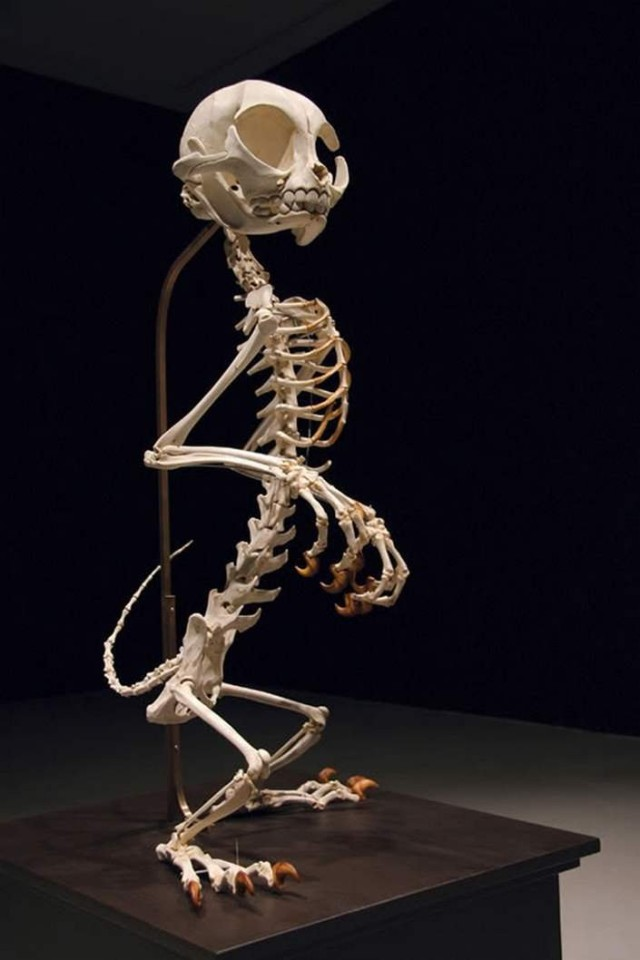 1368118977 9 640x960 Cartoon Skeletons by Hyungkoo Lee
